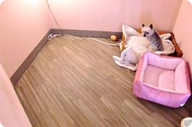 小~中型犬用個室内