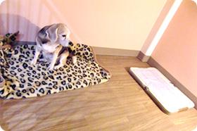 中型犬用個室内