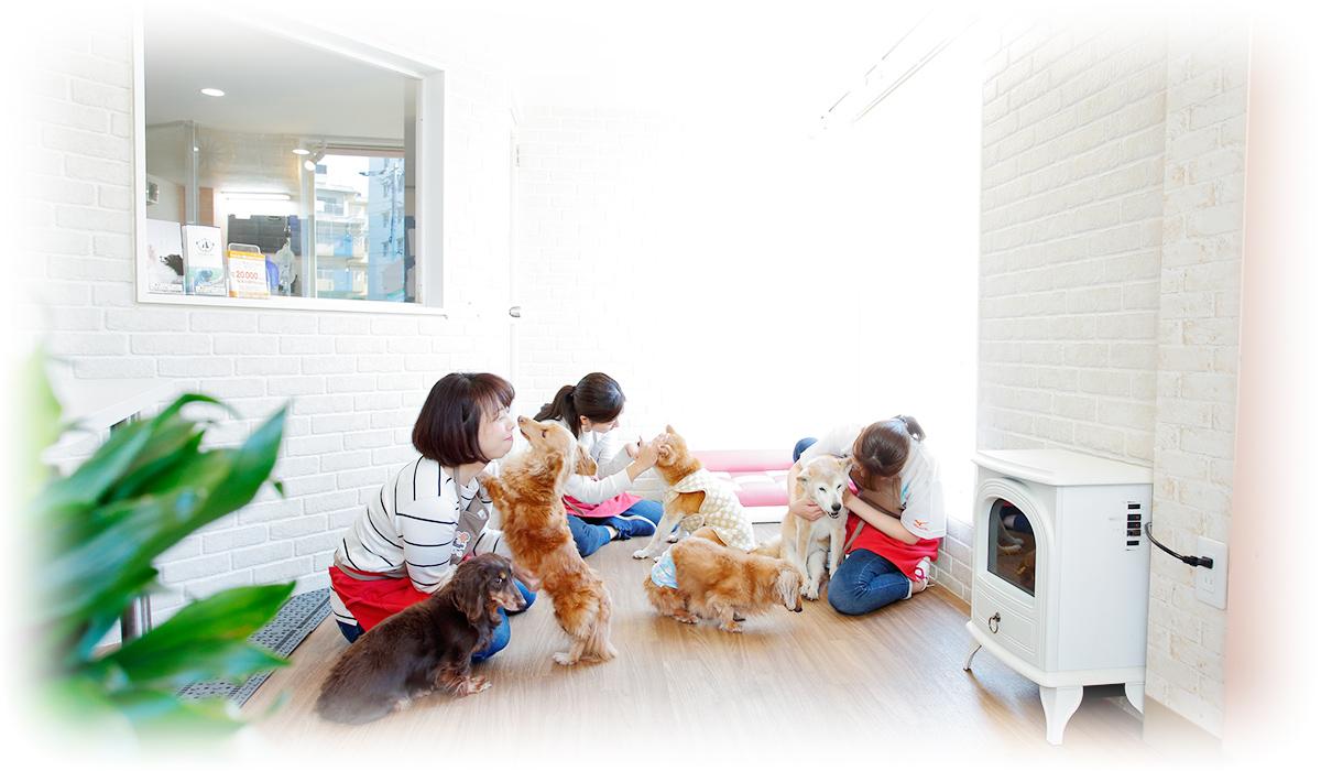 愛情と事績の老犬老描ホーム&介護対応ペットホテル